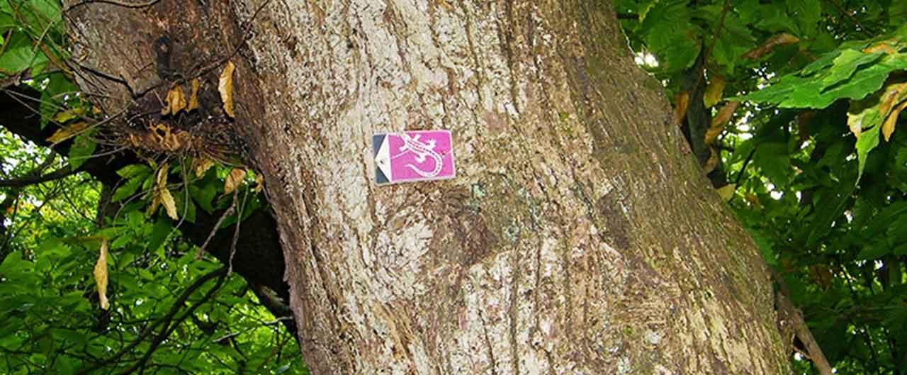 il sentiero del santuario contrassegnato dalla lucertola viola