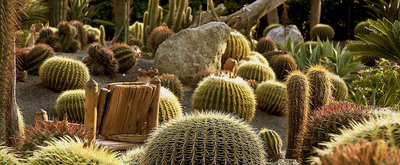 giardini ravino sull'isola di Ischia