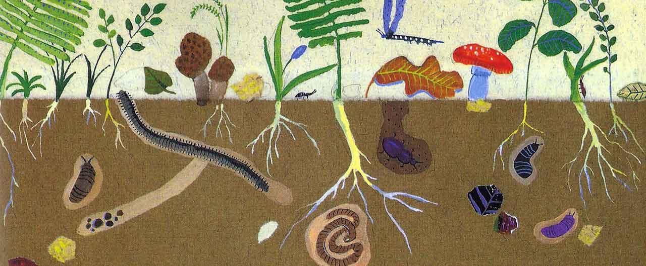 flora, fauna e leggende dell'isola di Ischia
