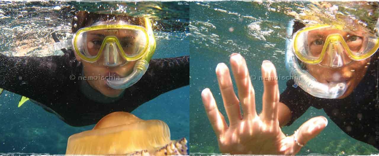 Sull'isola di Ischia si può effettuare lo snorkeling con NEMO